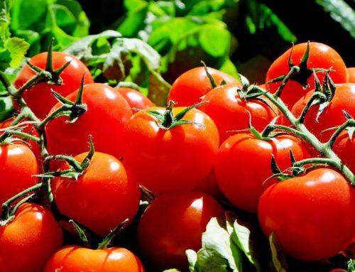 Agricultura utiliza homeopatia para evitar agrotóxico